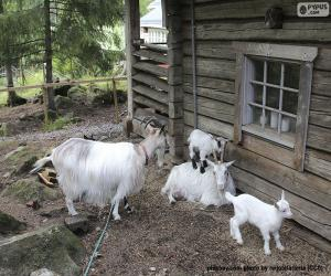 Goat family puzzle