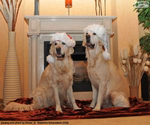 Golden retriever, Christmas puzzle