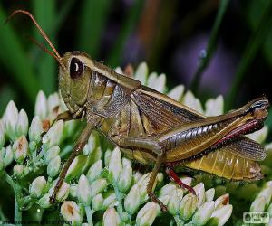 Grasshopper puzzle