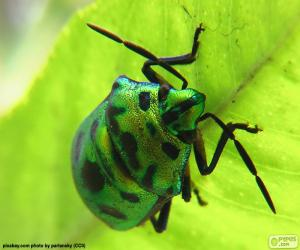 Green beetle puzzle