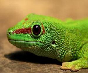 Green Lizard puzzle