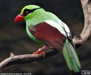 Green magpie puzzle
