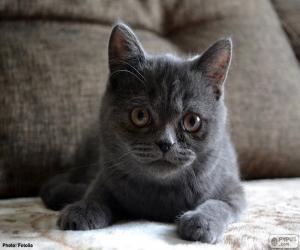 Grey cat puzzle
