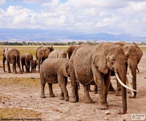 Group of elephants puzzle