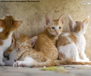 Group of kittens puzzle