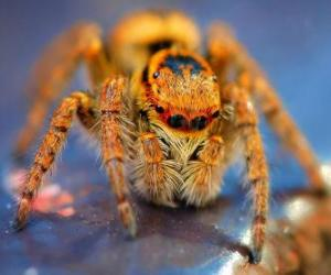 Hairy spider puzzle