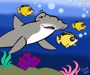 Hammerhead shark, Julieta Vitali puzzle