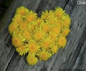 Heart formed by dandelion puzzle