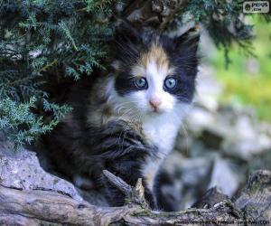Hidden Kitten puzzle