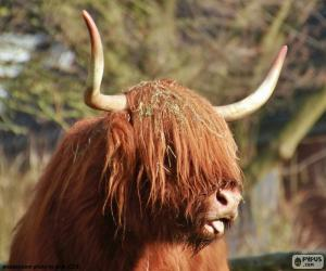 Highland cow head puzzle