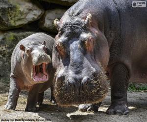 Hippopotamus next to his calf puzzle