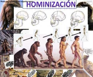 Hominization process puzzle