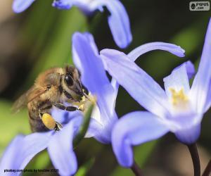 Honeybee collecting pollen puzzle