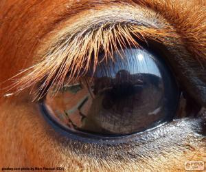 Horse eye puzzle