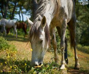 Horse grazing puzzle