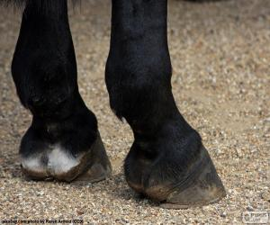 Horse hooves puzzle