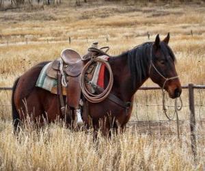 Horse of a cowboy puzzle