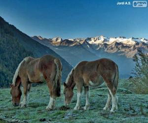 Horses grazing puzzle