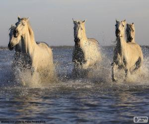 Horses in water puzzle