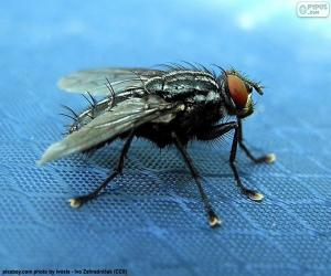 Housefly puzzle