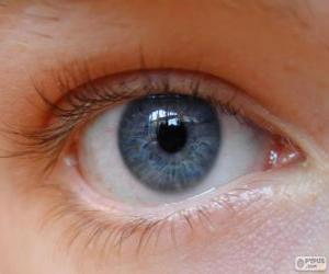 Human eye puzzle