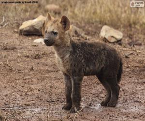 Hyena puppy puzzle
