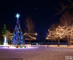 Illuminated christmas trees puzzle