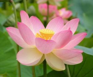 Indian Lotus puzzle