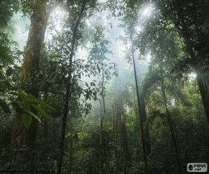 Interior of the jungle puzzle