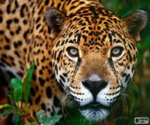 Jaguar head puzzle