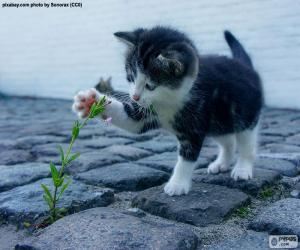Kitten and plant puzzle
