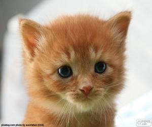 Kitten cute puzzle