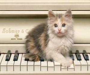 Kitten playing upon a piano puzzle