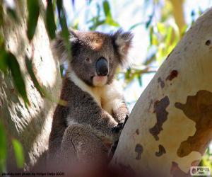 Koala in a tree puzzle