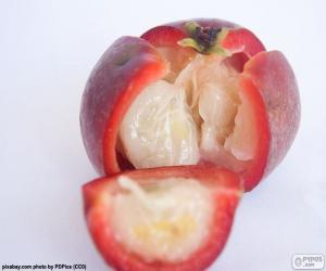 Kokum fruit puzzle