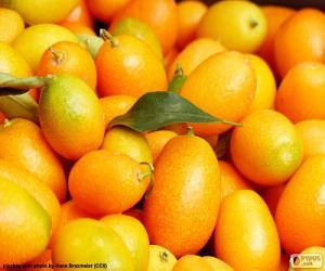 Kumquat or cumquats puzzle