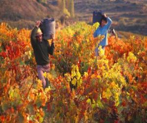 Laborers in the harvest puzzle