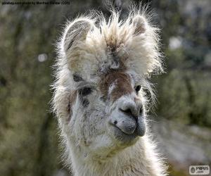Lama, head puzzle