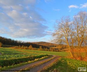 Landscape Field puzzle