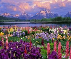 Landscape in spring puzzle