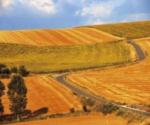 Landscape of rolling fields puzzle