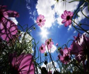 Landscape with flowers puzzle