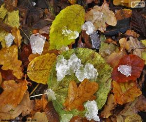Leaves and ice puzzle