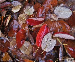 Leaves of autumn wet puzzle