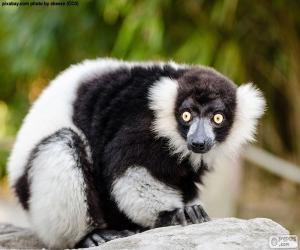 Lemur puzzle