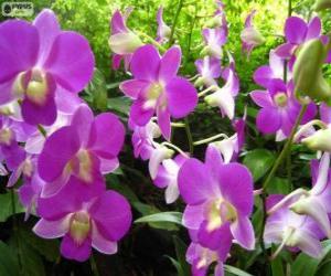 Lilac orchids puzzle