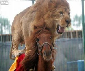 Lion and horse doing their circus performance puzzle