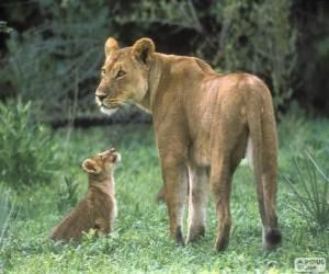 Lioness with her cub puzzle