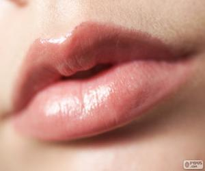 Lips of woman puzzle