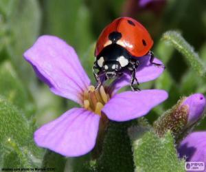 Lovely Ladybug puzzle